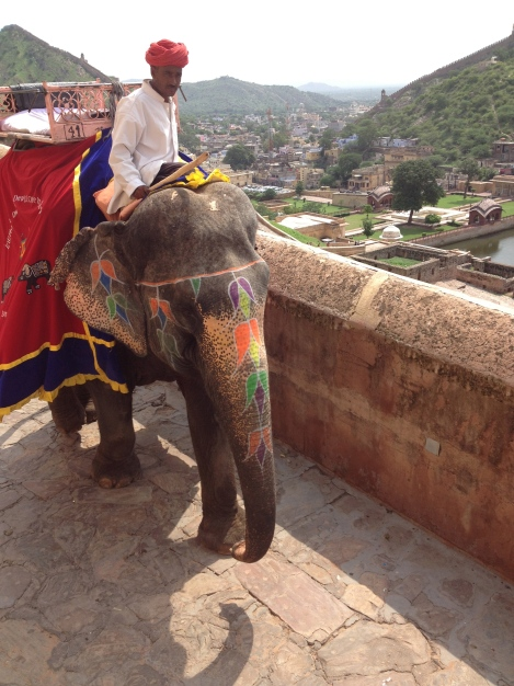 (Photo courtesy of Maddie Oaks) Riding elephants up to the Amber Palace in Jaipur