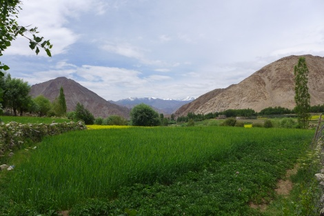 (Photo courtesy of Maddie Oaks) A gorgeous view of the Himalaya from a village outside of Leh, Ladakh.