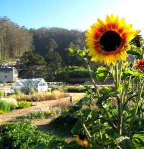 Photo of the garden Photo courtesy of Pacifica Gardens.
